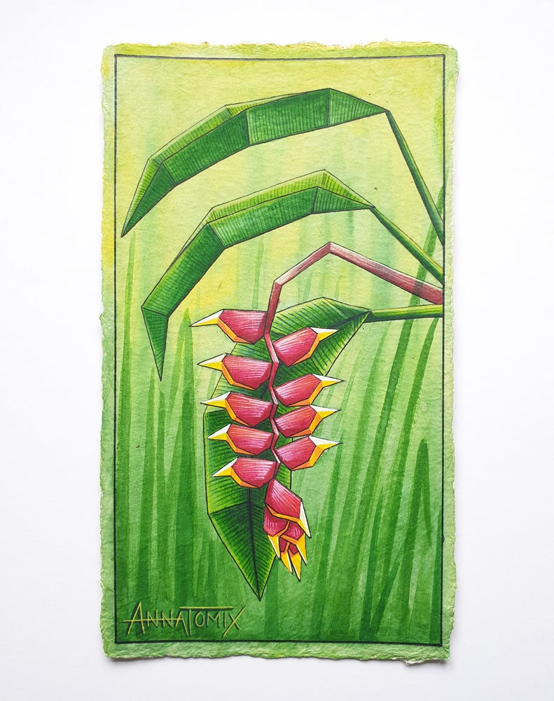 "Image of ""Hanging lobster claw"" original watercolour study"