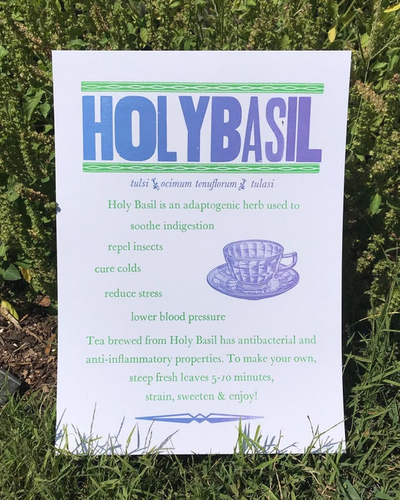 Image of Holy Basil poster