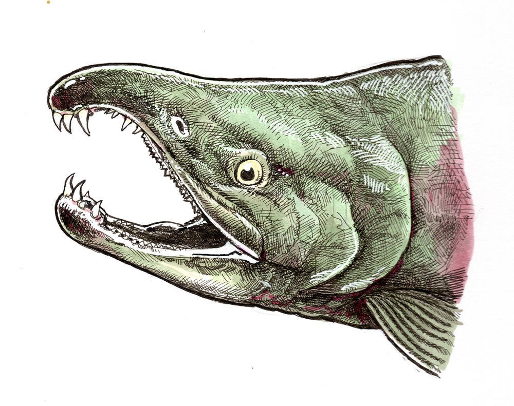 Image of Chum Jaws Sticker or Print