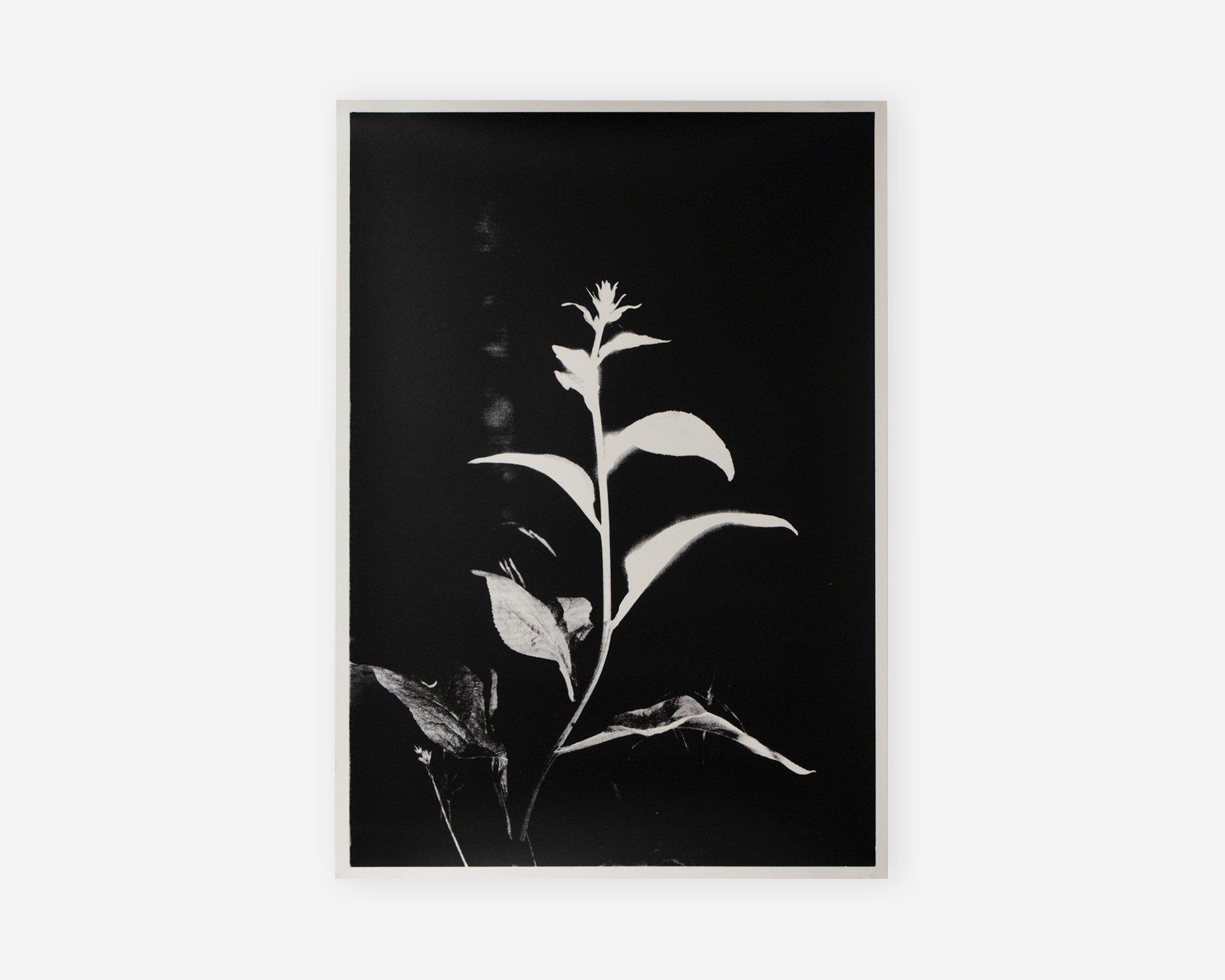 Image of Coley Brown - Silkscreen Glow Print