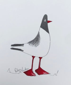 Image of Mrs Black Headed Gull