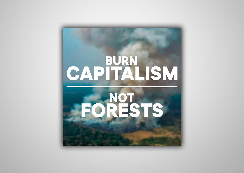"Image of 100 Autocollants ""BURN CAPITALISM NOT FOREST"""