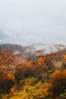 Image 1 of Autumn Prints
