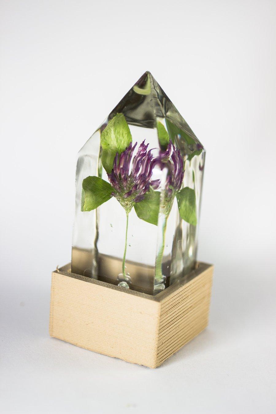 Image of Red Clover (Trifolium pratense) - Floral Prism Light #3