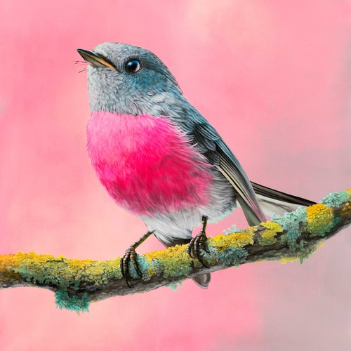 Image of Rose Robin