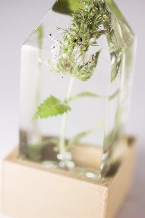 Image of Catnip (Nepeta cataria) - Floral Prism Nightlight #2