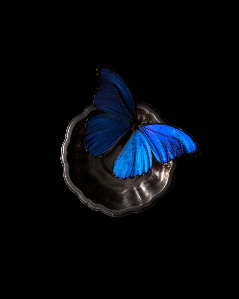 Image of 'Blue Morpho' - Remnants Series - Limited Run