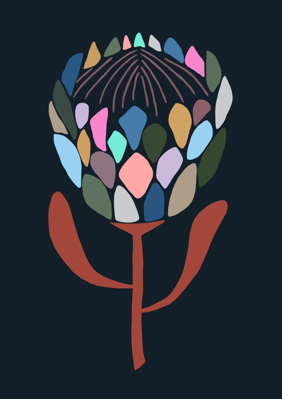 Image of Protea