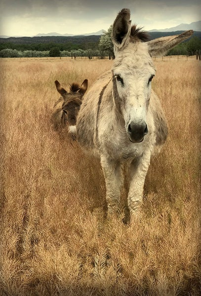 Image of Dusty & Pancha (note card)