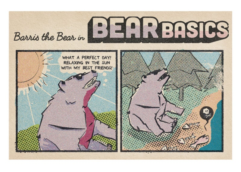 Image of Barris the Bear in Bear Basics