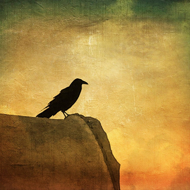 Image of Lone Crow (note card)