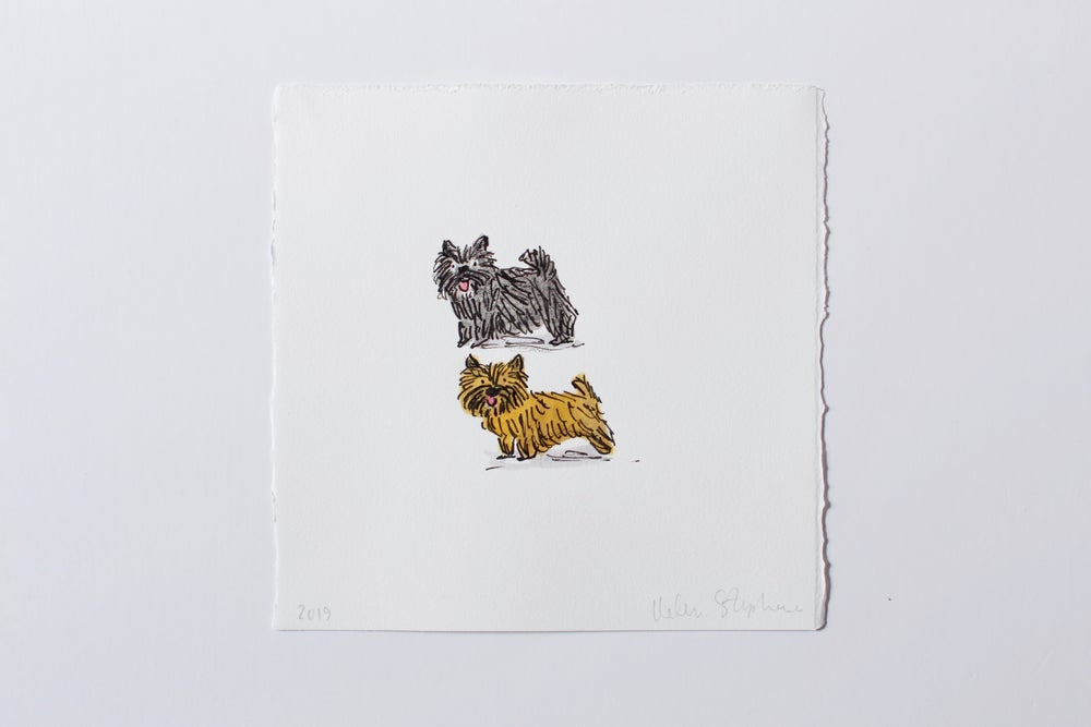 Image of Two Small Dogs