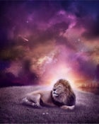 """Image of """"Lions"""""""