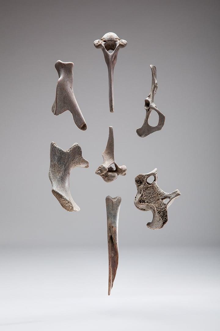 Image of Thames Bones