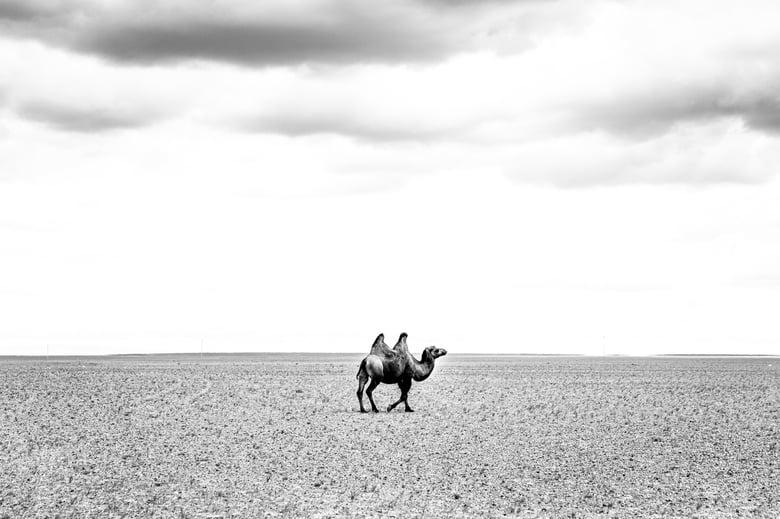 Image of Mongolia 6