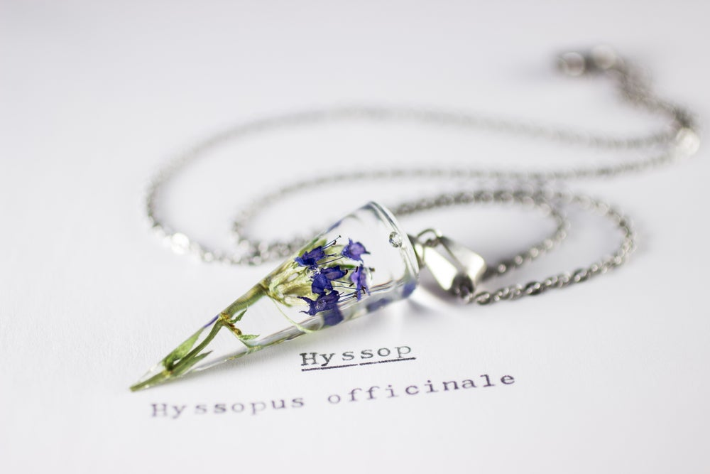 Image of Hyssop (Hyssopus officinalis) - Conical Pendant #2