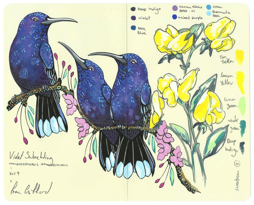 Image of Violet Sabrewings and Sweet Peas