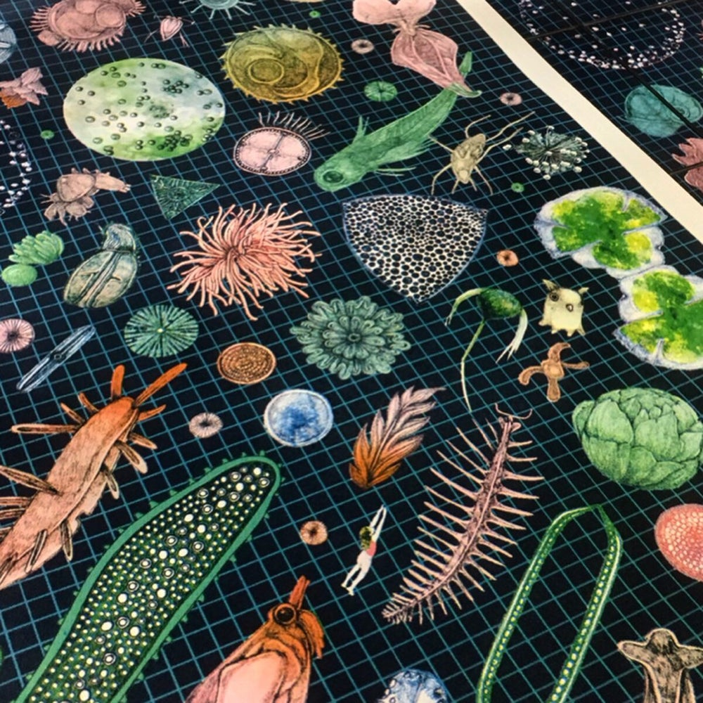 Image of Plankton collection