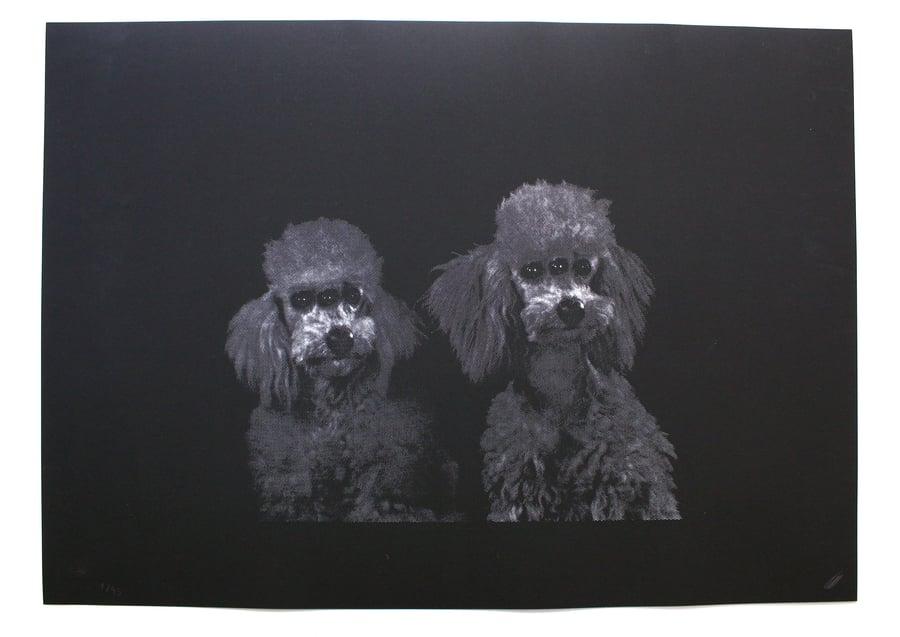 Image of Three Eyes Poodle