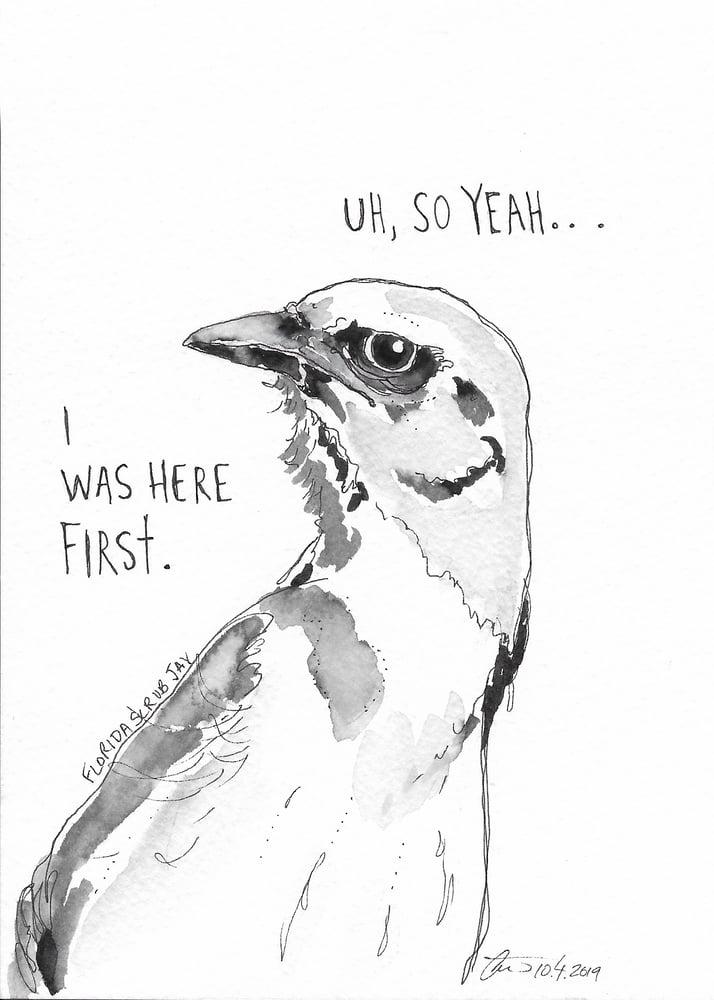 Image of Florida Scrub Jay