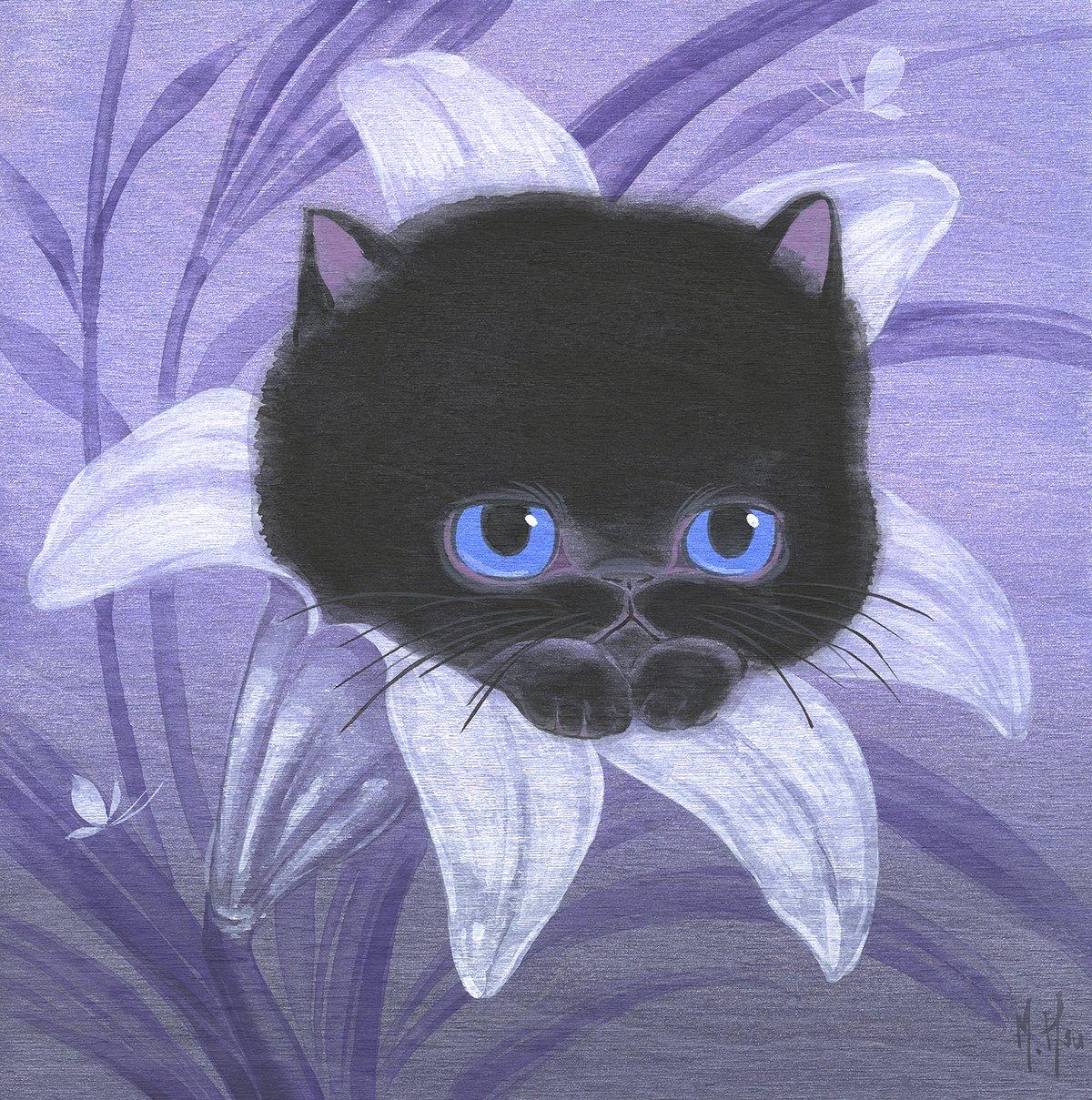 Black Cat Peek-A-Boo