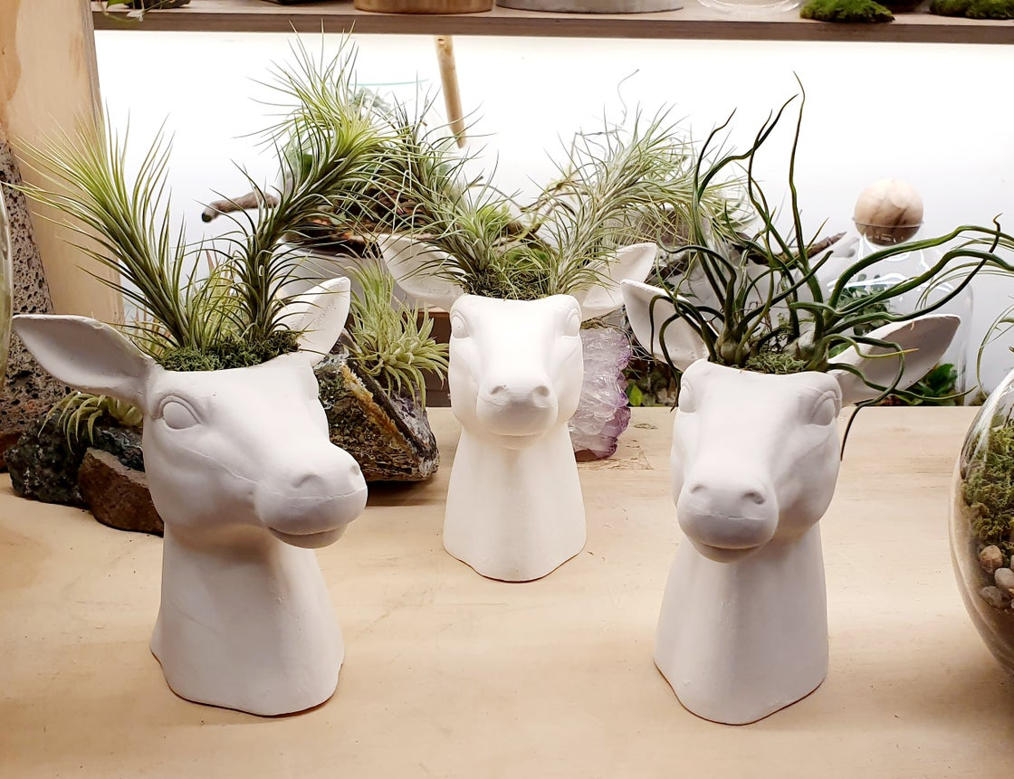 Image of Deer Heads with Plantlers