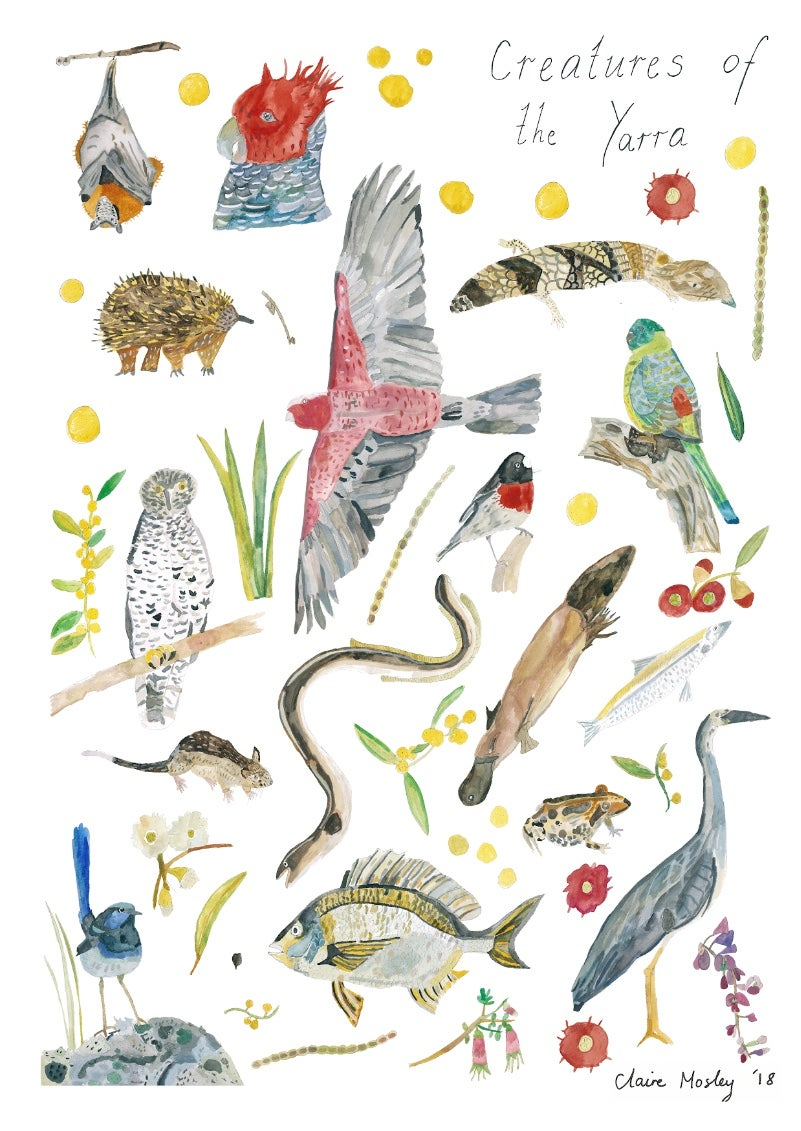 Image of Creatures of the Yarra ~ Prints