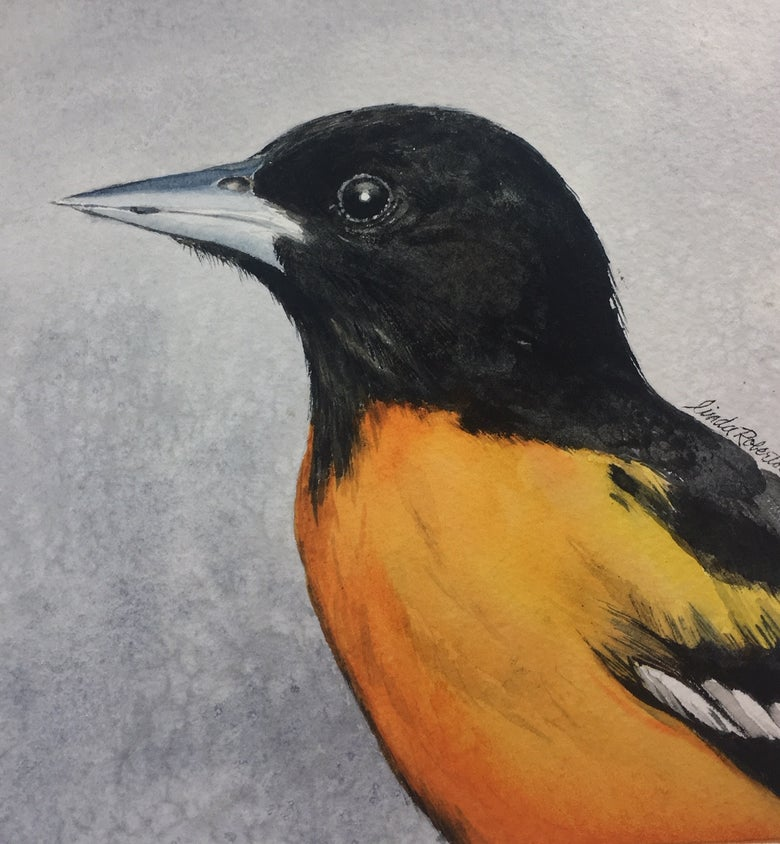 Image of Baltimore Oriole