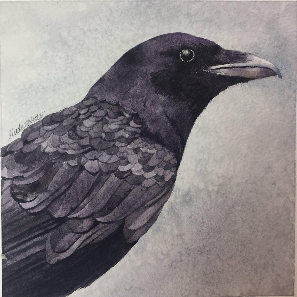 Image of Baltimore Raven
