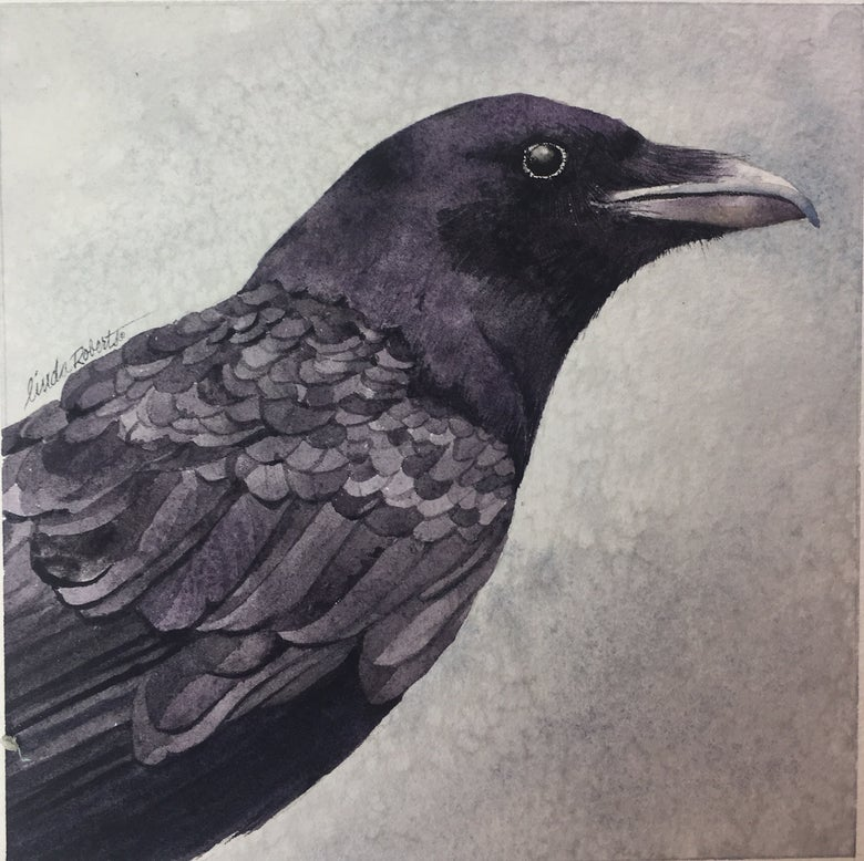 Image of Baltimore Raven
