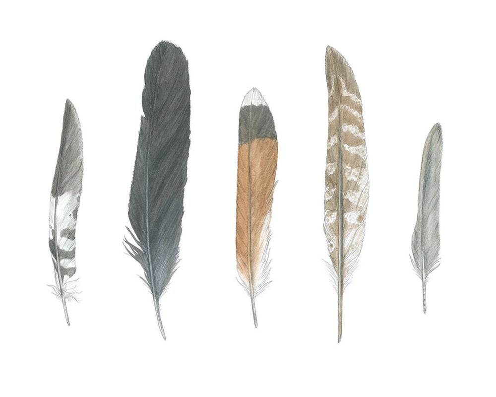 Image of Five Feathers II: autumn edition 8x10 print