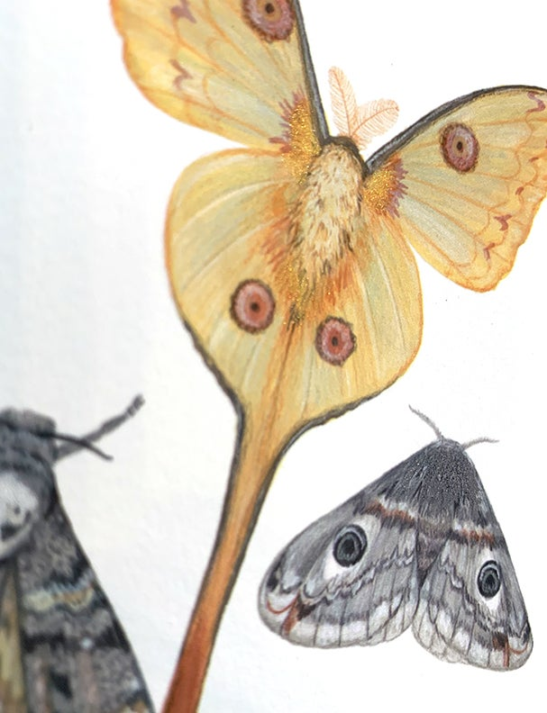Image of Three moths note card