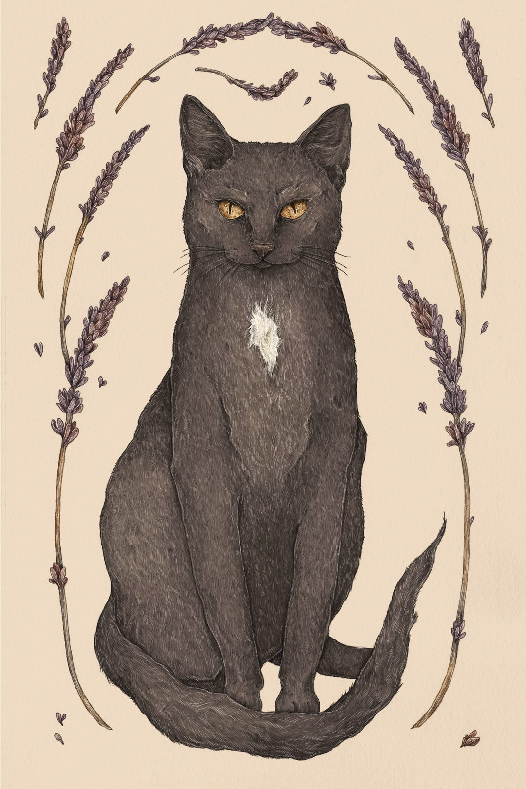 Image of Cat and Lavender Print