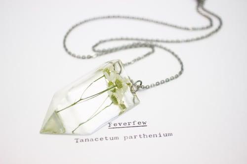 Image of Feverfew (Tanacetum parthenium) - Small #1