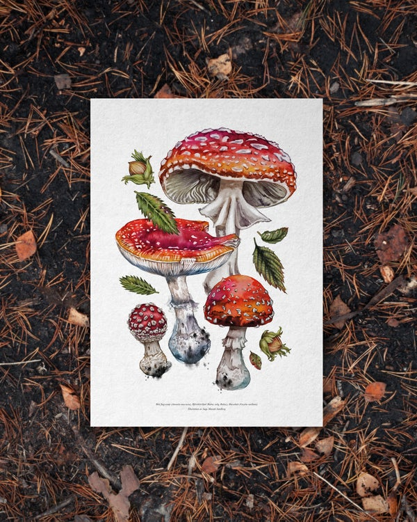 Image of FLY AGARICS PRINT