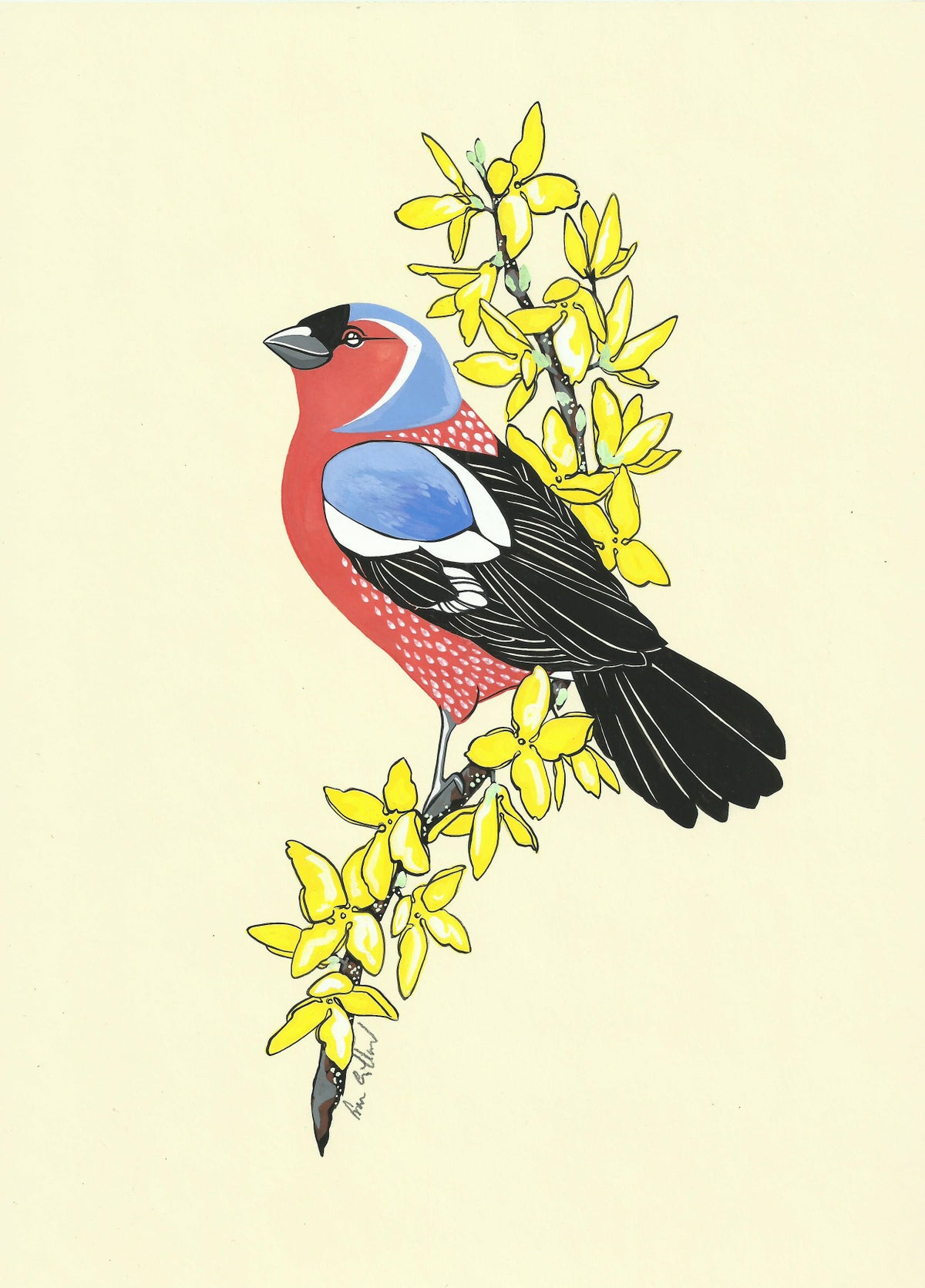 Image of Chaffinch and Forsythia