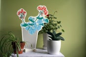 Image of Houseplants: Geranium #1