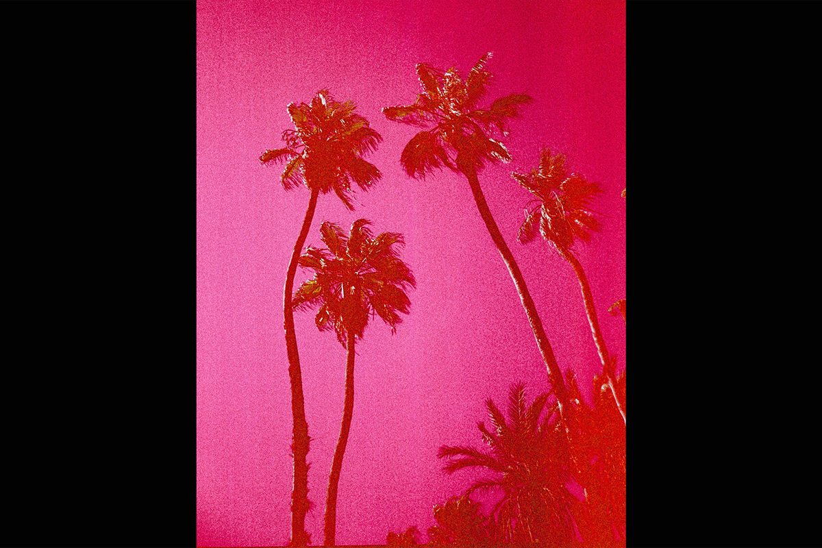 Image of PINK PALMS