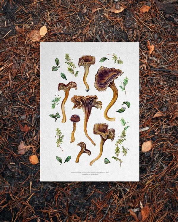 Image of Yellowfoot Chanterelles Print