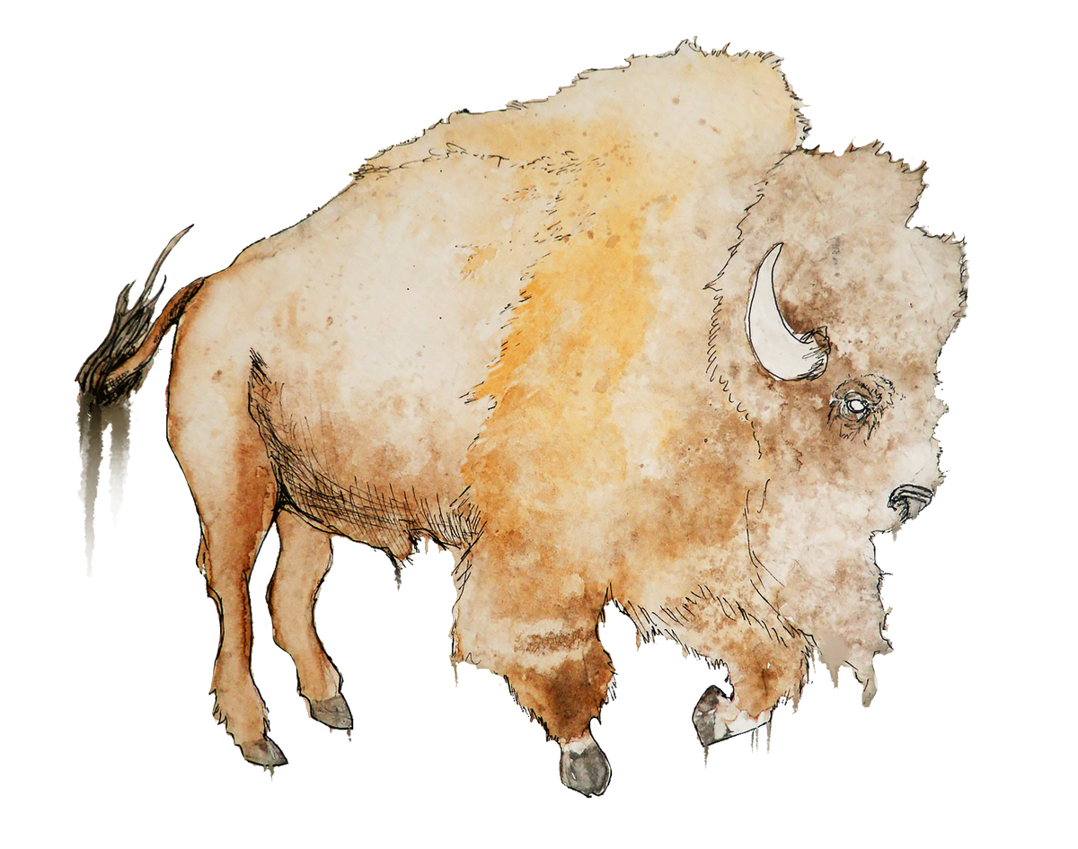 Image of Bison Sticker