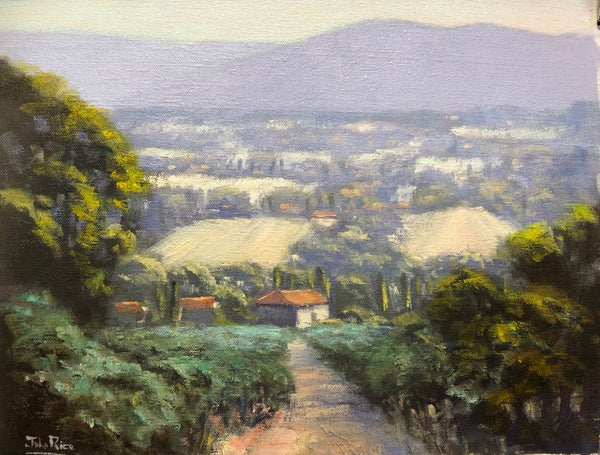 Image of Morning In The Olive Grove