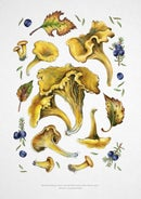 Image of Chanterelles Print