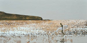 Image of Changing Tide, Treyarnon Bay, Cornwall