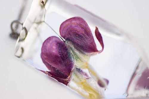 Image of Bleeding Heart (Lamprocapnos spectabilis) - Small #5