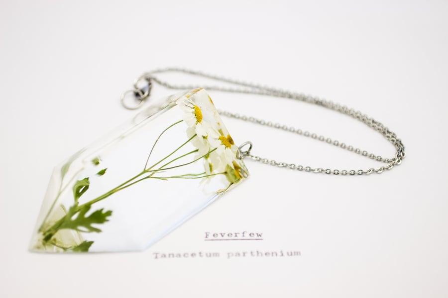Image of Feverfew (Tanacetum parthenium) - Chunky Statement Piece #2