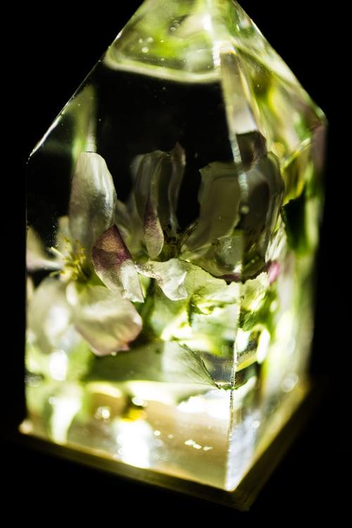 Image of Apple Blossom (Malus domestica) - Floral Prism Light #1