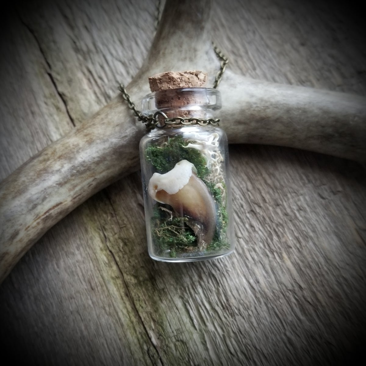 Image of Gemstone and Wolverine Claw Terrarium Necklace
