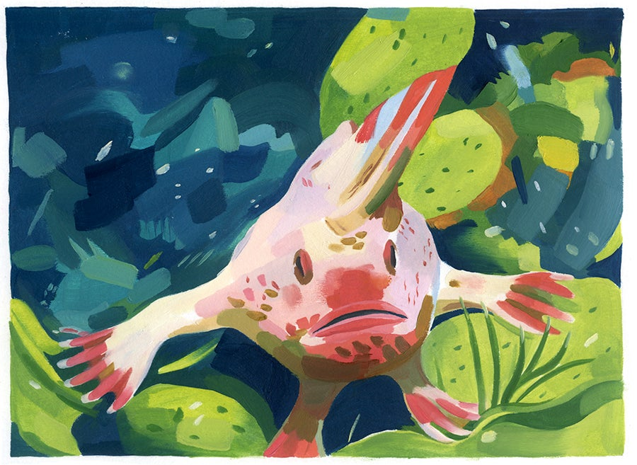 Image of Handfish prints