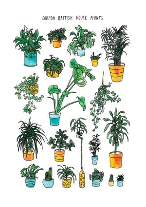 Common British House Plants