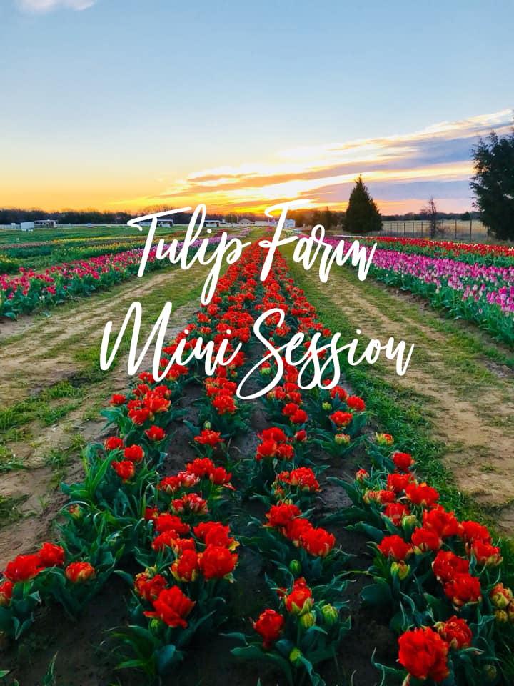 Image of 2020 | Tulip Farm Mini Session | Texas